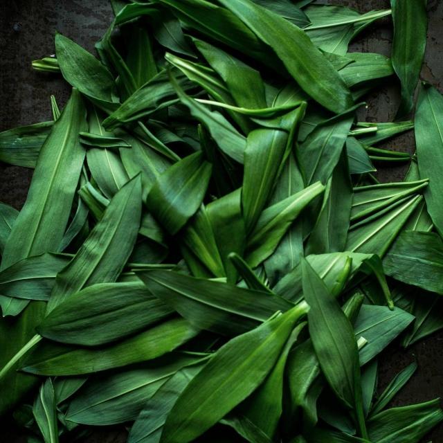 Wild wild garlic
