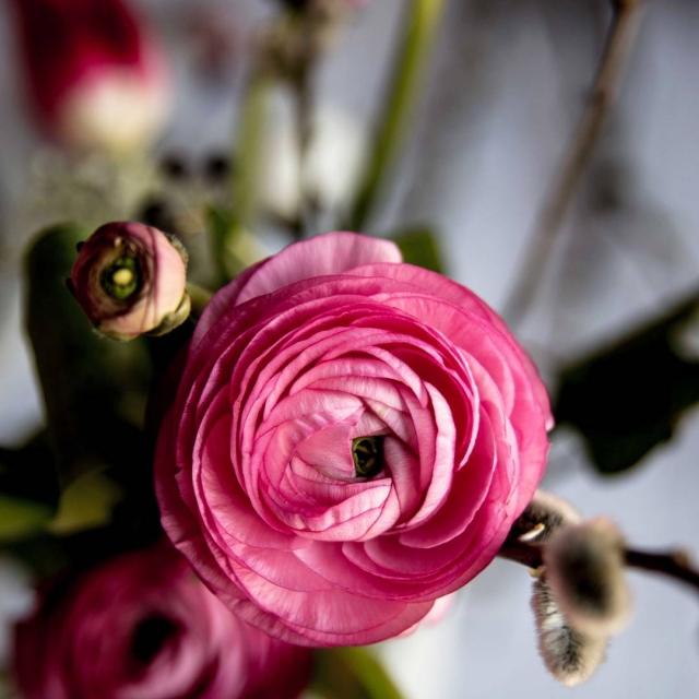 Dokonaly kvet toto Aj vy mate svoje oblubene? U mnahellip