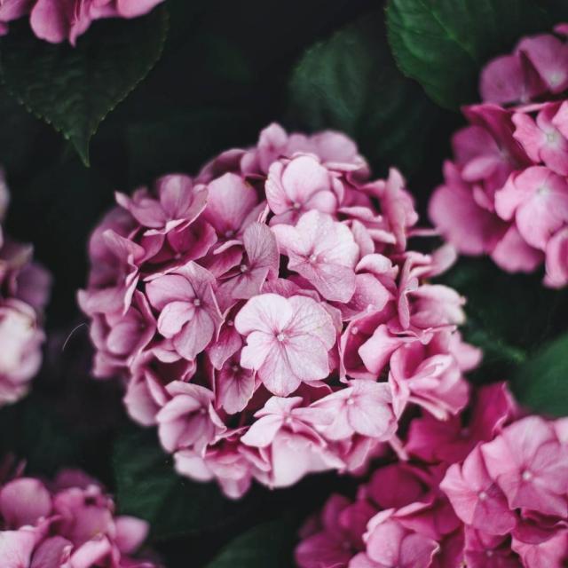 Detaily howihue theartofslowliving colorstagram flowerstagram flowersofinstagram