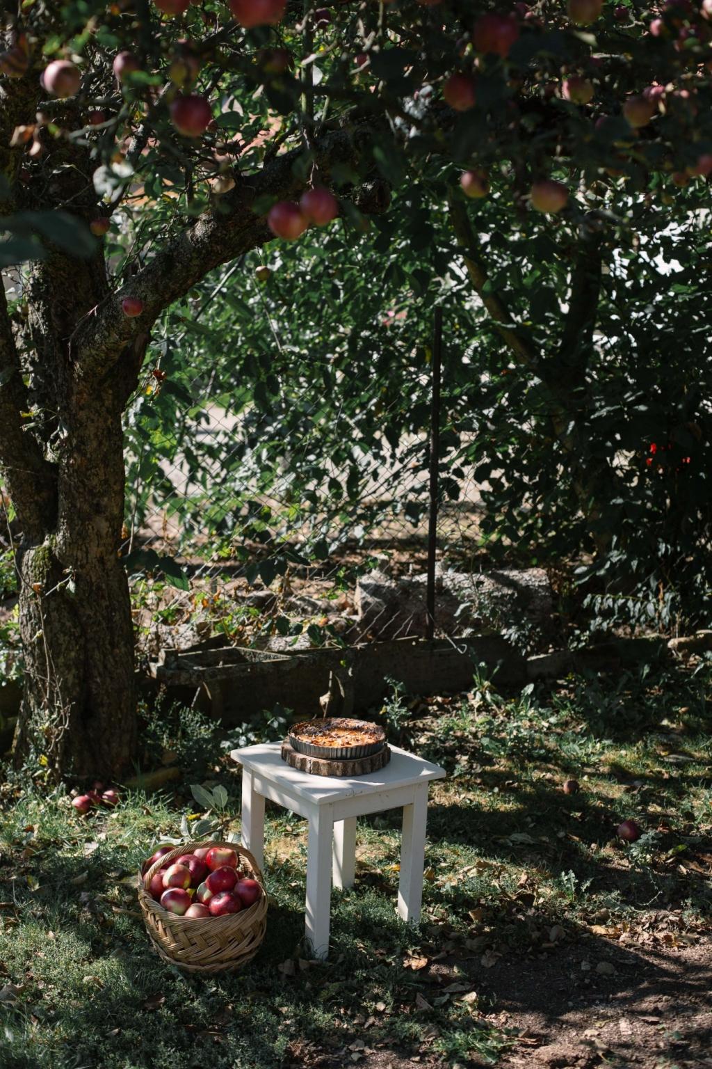 Jablkový koláč s orechovým korpusom (bez múky)