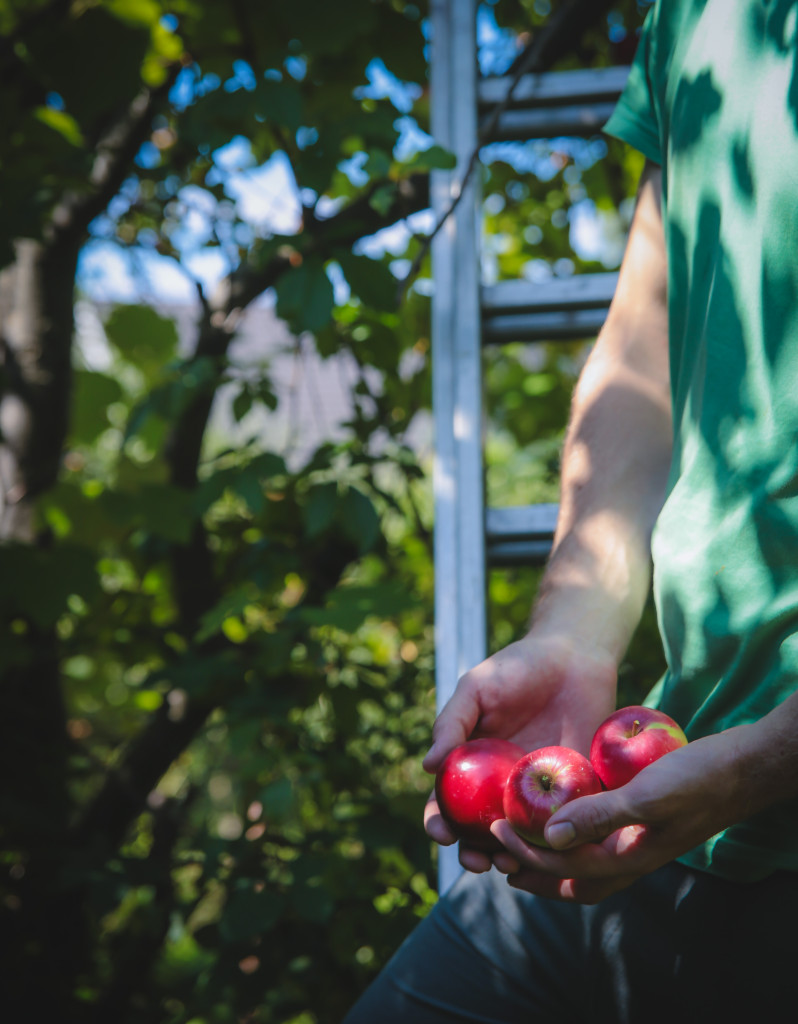 jablkovy2 mini