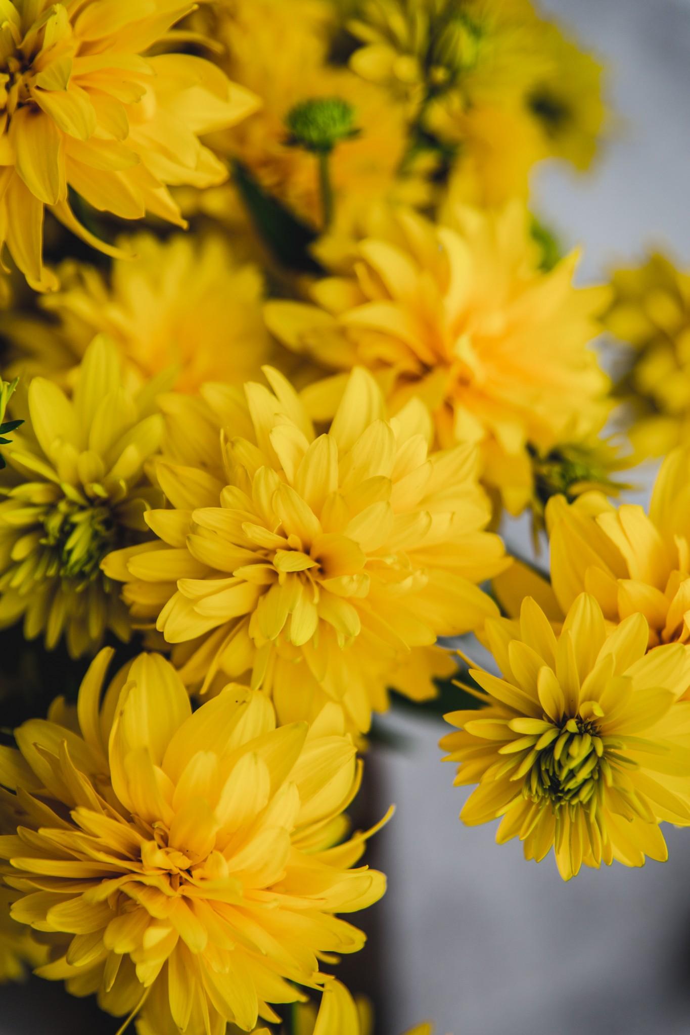 nektarinkovy (1 of 8)